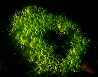 Green Nebulae...