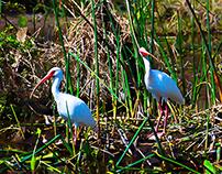 Eden Gardens State Park - Point Washington, Florida
