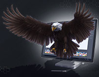 Sea Eagle Digital Art