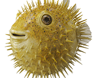 RAIFFEISEN BANK - Puffer Fish