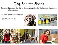OTP- Treatment, Dog Shelter