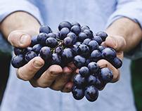 Valentin Vin, Wine Import