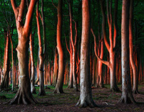 Fairy trees of the Baltic Coast