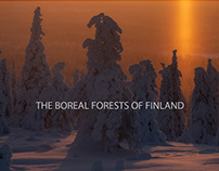 THE BOREAL FORESTS OF FINLAND