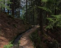 sentieri nel bosco (I)