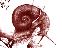 GASTROPODS LITHOGRAPHY - red snail