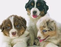 How to Choose the Best Puppy in the Litter