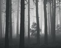 - Pine fog -