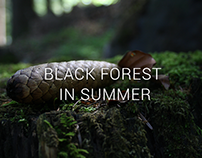 Photography - Black forest in summer