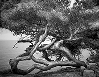 The intertwined tree of islands St Marguerite