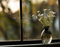 White Flowers In Window