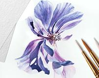 Watercolor anemone