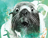 Northern Fur Seal illustration for Seattle Aquarium.