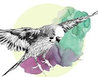 Furry Bird III
