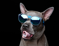 !Cool Boy! Caesar - the Thai Ridgeback