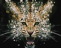 Leopard 2015