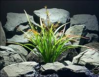faux reptile plant terrarium plant.: oat grass
