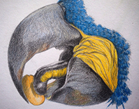 Hyacinth Macaw, beak detail