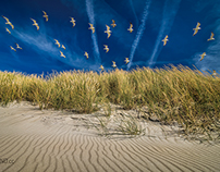 Dune Traffic