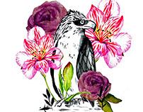 Philippines Birds Illustrations