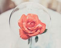 Natura Esta Flor | Almoço Fasano