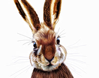 Illustration: Hare