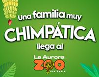 Campaña Expectación Zoo