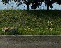 Nature|Grass&Flowers