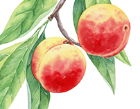 Botanical illustrations for Digital BBDO. Fruit trees