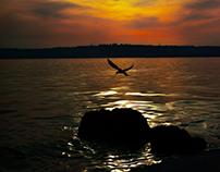 Mockingbird - Alaycı Kuş