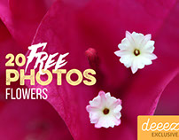 20 Free Flower Photos