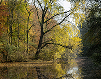 "The beautiful autumn in the ""Amsterdamse bos"" (Holland)"