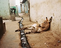 Kenya (35mm Travel)