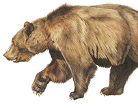 Watercolor Brown Bear in Stride