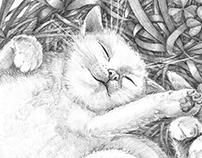 Cat`s dream