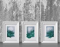 Succulents#1 - prints