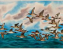 Duck Migration