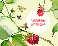 Raspberry hand drawn watercolor illustration.