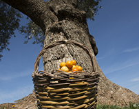 ancient olive trees in Apulia region