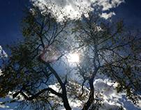 """""""Treescape"""""""