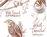 the Sparrows of Winter 2017-2018