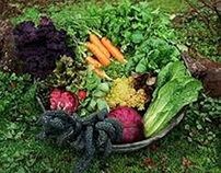 Vegetables That are Easy to Grow in Your Garden