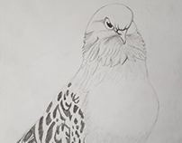 Pigeon Sebap miski