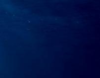 Conto - Corvette Azul Marinho