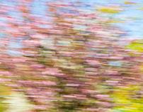 Frühlingsspaziergang / Spring walk