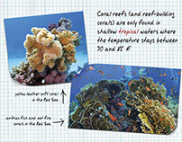 Coral Reef Educational Signage