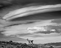 Guanacos and Lenticular Cloud