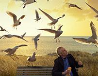 Volkswagen Seagulls, Zebra & Pig Campaign