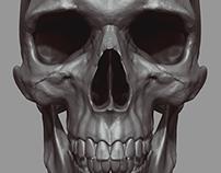 Zbrush Anatomy Study: Human Skull