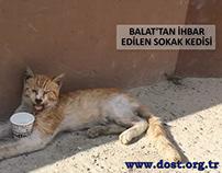 Yaralı Sokak Kedisi - Dost Derneği